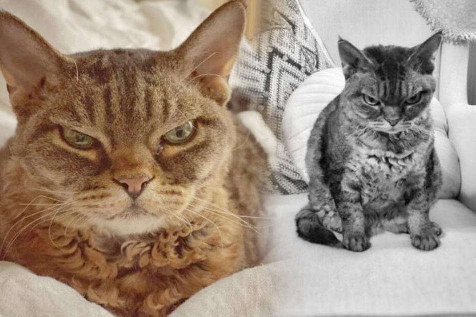Dieser Katze reicht's komplett: Muffel-Mietze Grumpy Barbara wird zum Internet-Hit!