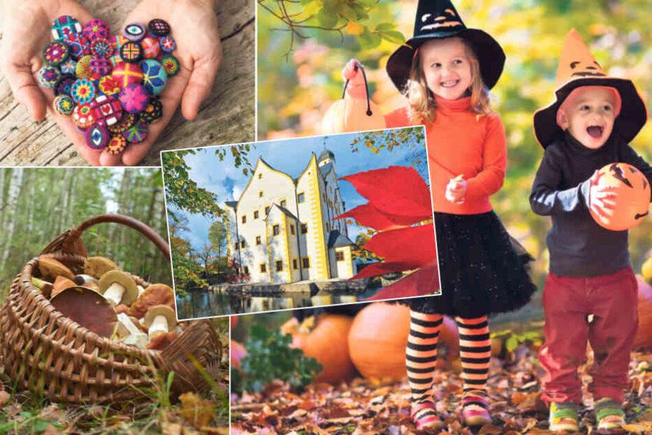 Dresden: Sieben schöne Tipps für Euren letzten Sonntag im Oktober