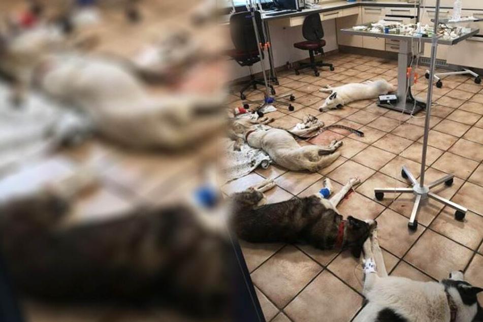 Sechs Hunde auf Privatgrundstück vergiftet: Belohnung ausgesetzt!
