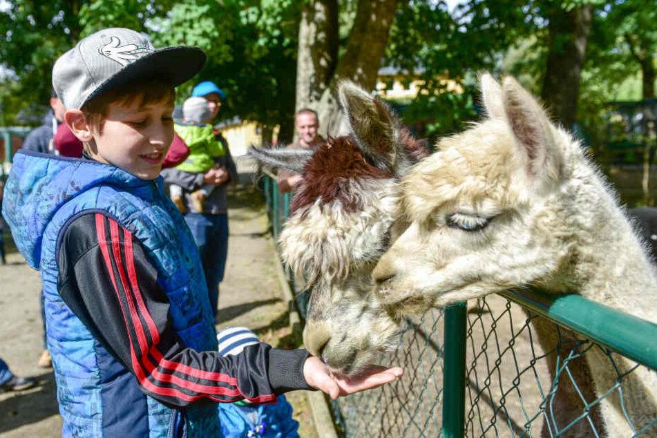 Besucher-Rekord! Nimmt Limbach den anderen Zoos die Gäste weg?