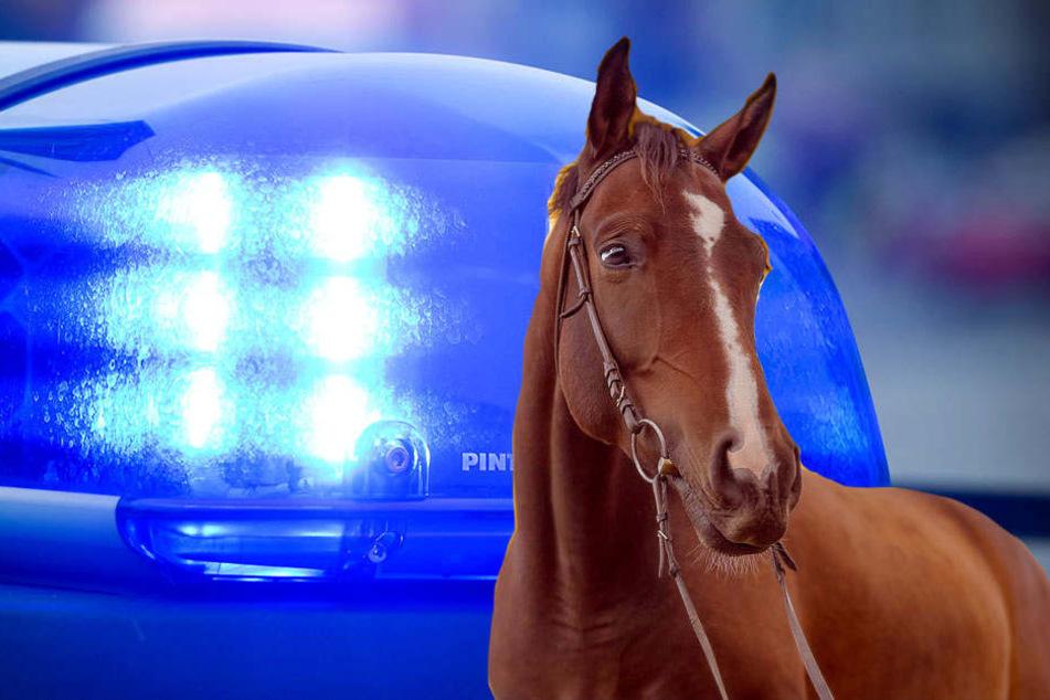 Bei einem Reitausflug scheute das Pferd einer Frau plötzlich und warf sie ab.