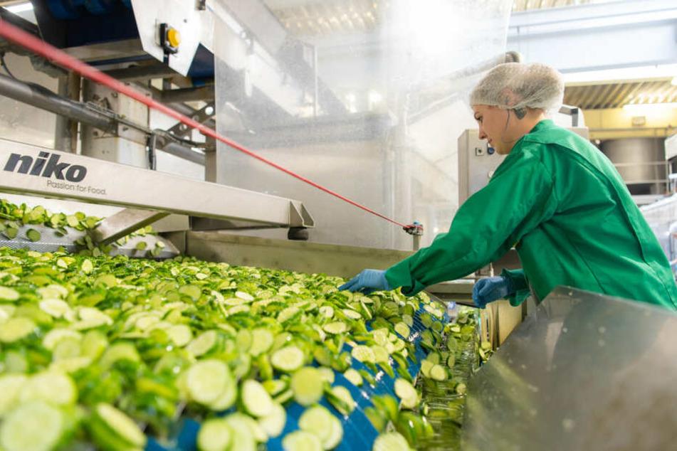 Viele Stellen in der Lebensmitteltechnik sind noch unbesetzt.