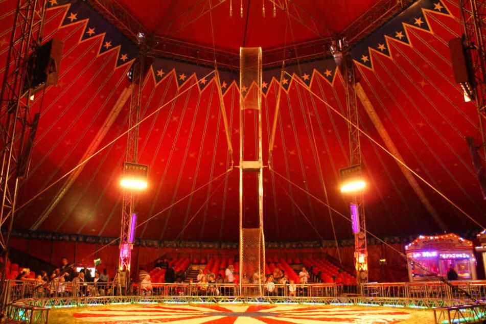Keine Wildtiere im Zirkus? Gericht hat entschieden