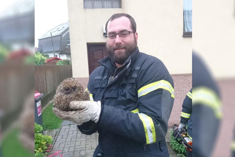 Stolz hält ein Feuerwehrmann den geretteten Igel in seinen Händen.
