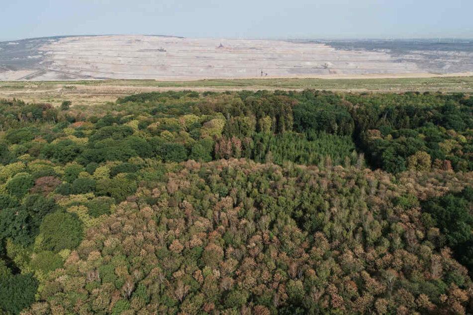 Die Reste des Hambacher Forstes am Rande des Tagebau Hambach.