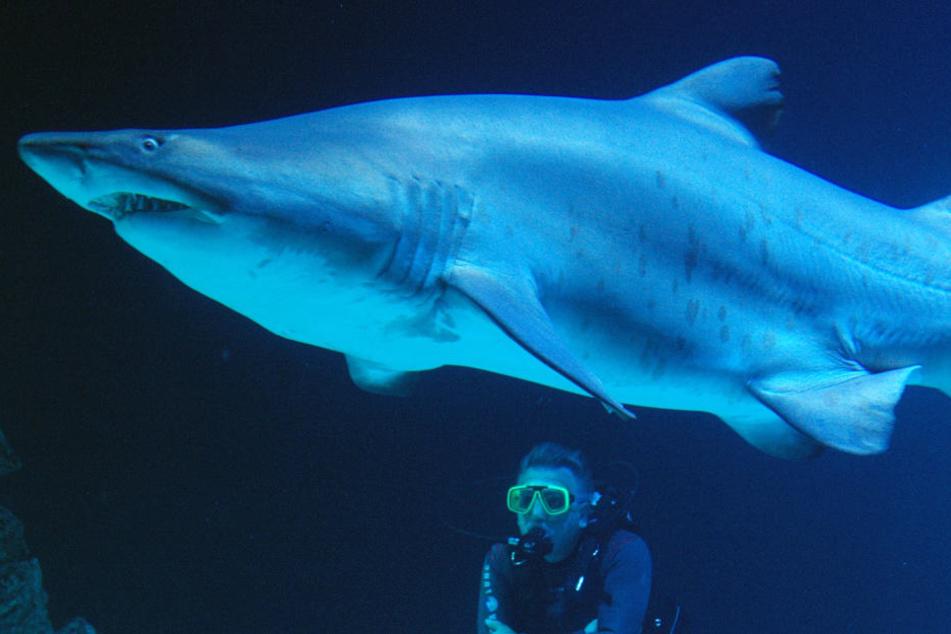 Größtes Hai-Aquarium Europas: Ist das Tierquälerei?