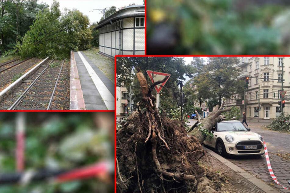 Bahnstrecken und Straßen sind nach wie vor von umgestürzten Bäumen betroffen.