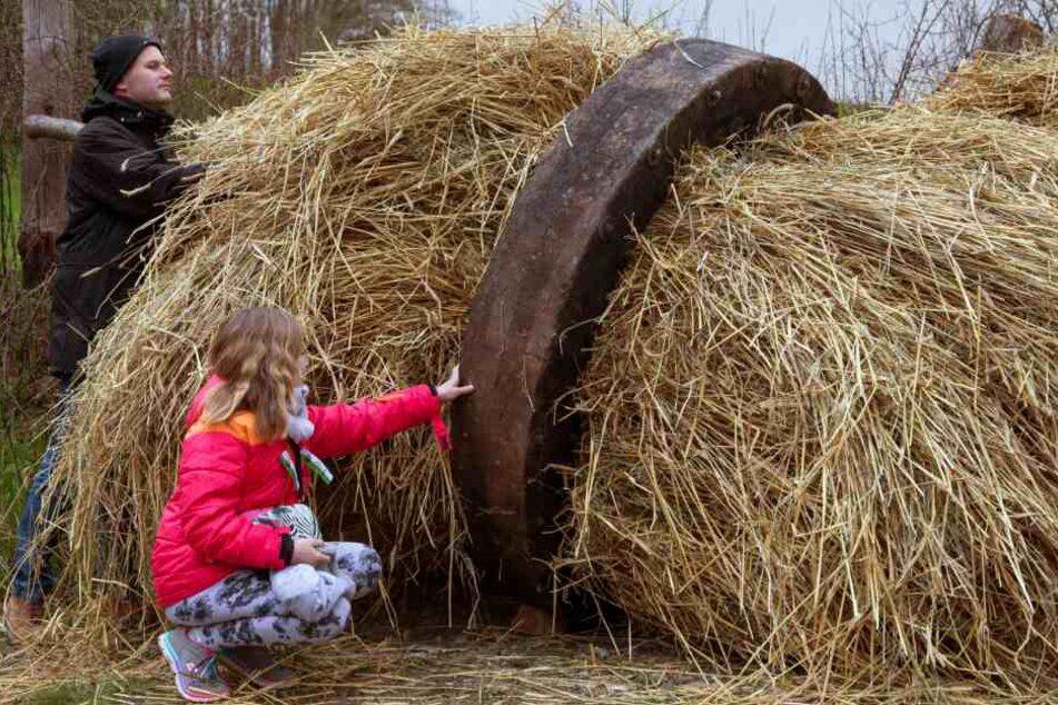 Die riesigen Holzräder werden erst mit Roggenstroh gefüllt...
