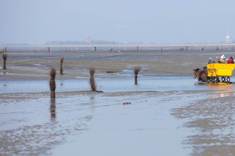 Eine Kutsche der Wattenpost fährt mit Touristen besetzt im Wattenmeer durch einen Priel.