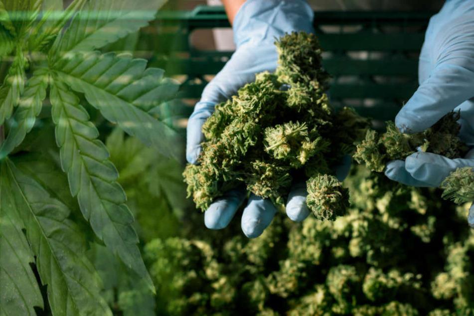 In Hamburg ist die Nachfrage nach Cannabis auf Rezept enorm. (Symbolbild)