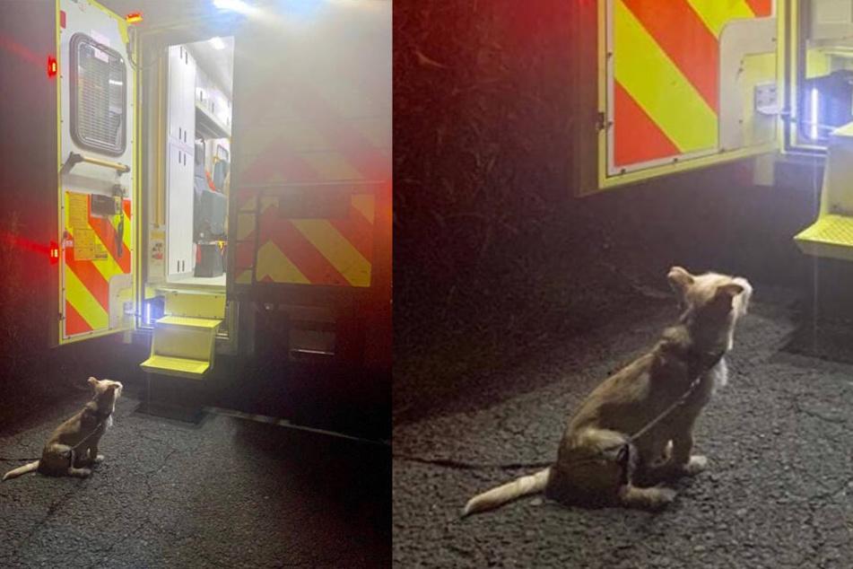 Als ein Polizist diesen Hund sieht, macht er sofort ein Foto