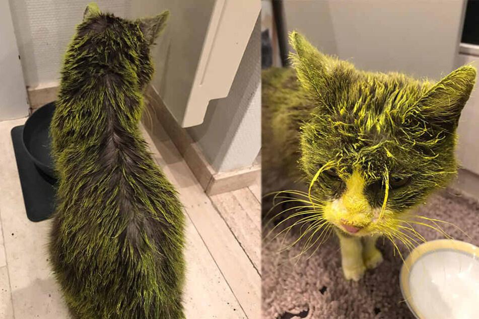 Besitzerin geschockt: Katze liegt nach fieser Farbattacke im Sterben
