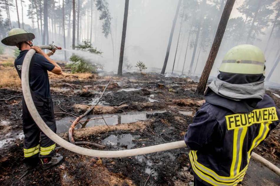 Die Waldbrandgefahr im Raum Berlin-Brandenburg steigt immer weiter an (Symbolbild).