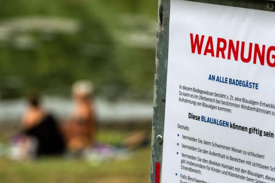 Blaualgen-Alarm an der Kiesgrube in Großzschocher! (Symbolbild)