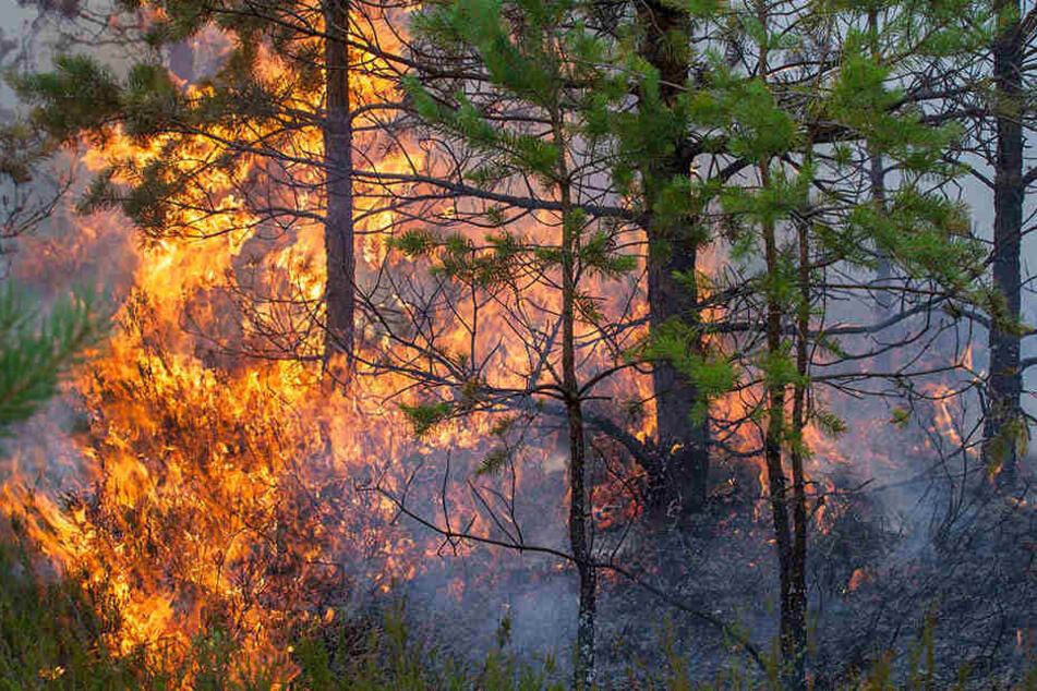 Zehn Wanderer konnten den Flammen nicht entkommen. (Symbolbild)