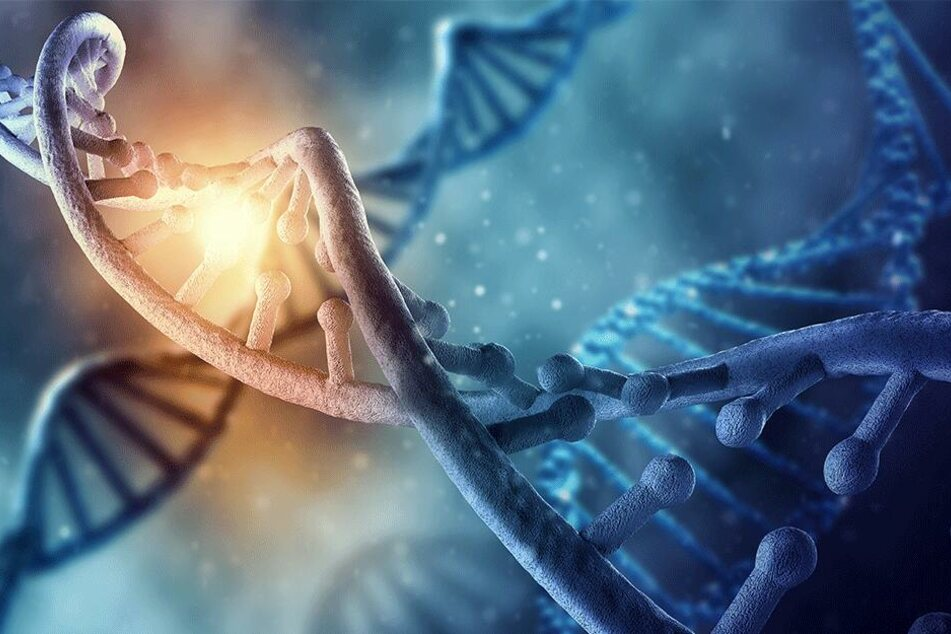 Wissenschaftliche Genialität oder ethisches Debakel? Forscher aus Spanien züchteten ein DNA-Mischwesen.