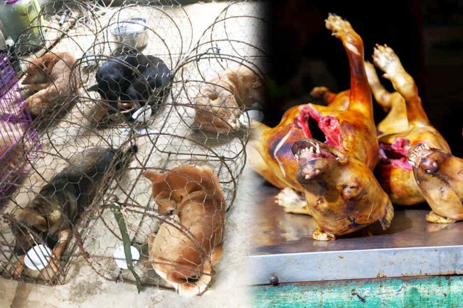 Sie sollten gegrillt werden: 51 Hunde in letzter Sekunde gerettet
