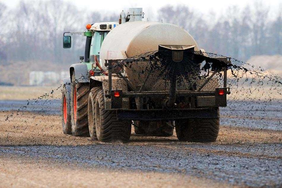 Durch die Gülle, die Bauern auf ihren Feldern zum Düngen benutzen, gelangt Nitrat ins Grundwasser und verseucht dieses.