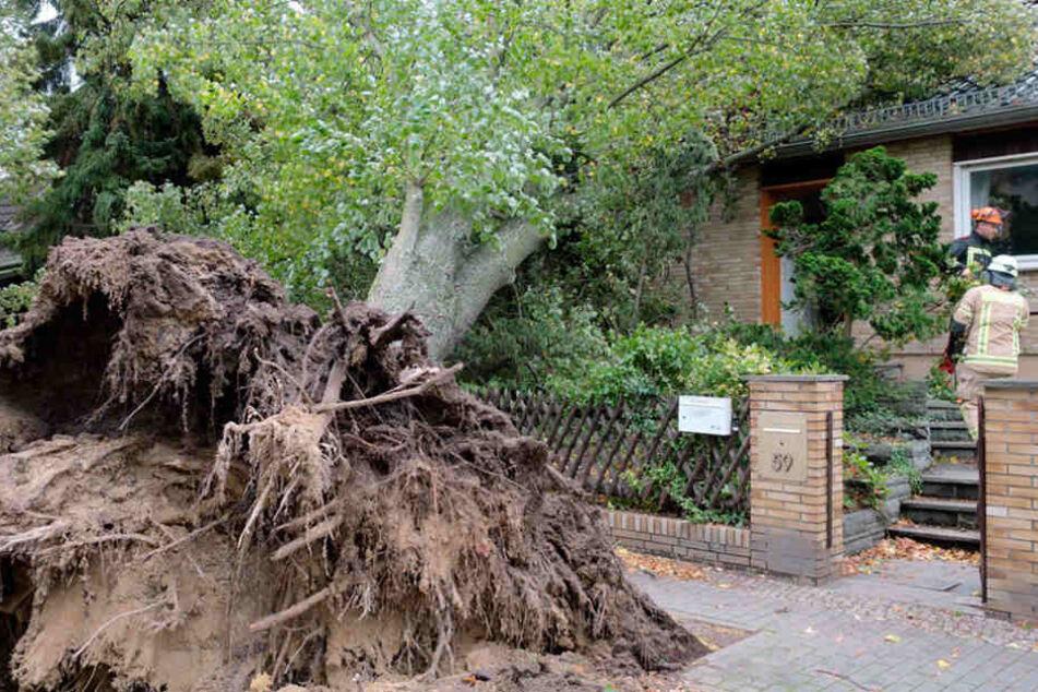 In Berlin-Heiligensee krachte ein Baum auf ein Einfamilienhaus.