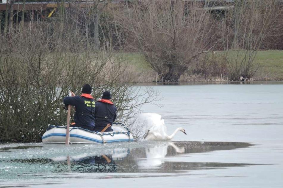 Nach einer Stunde erreichten die Kameraden der Feuerwehr das Tier zwar, dieses befreite sich jedoch selbst und robbte sich auf dem Eis davon.