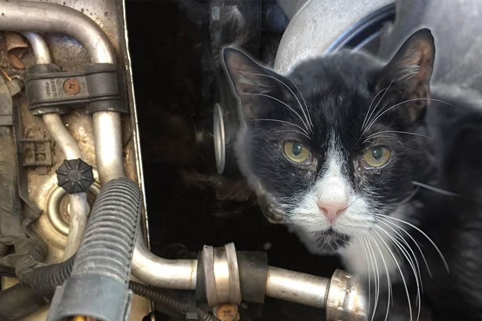 Katze wird in Motor eingeklemmt und schwer verletzt