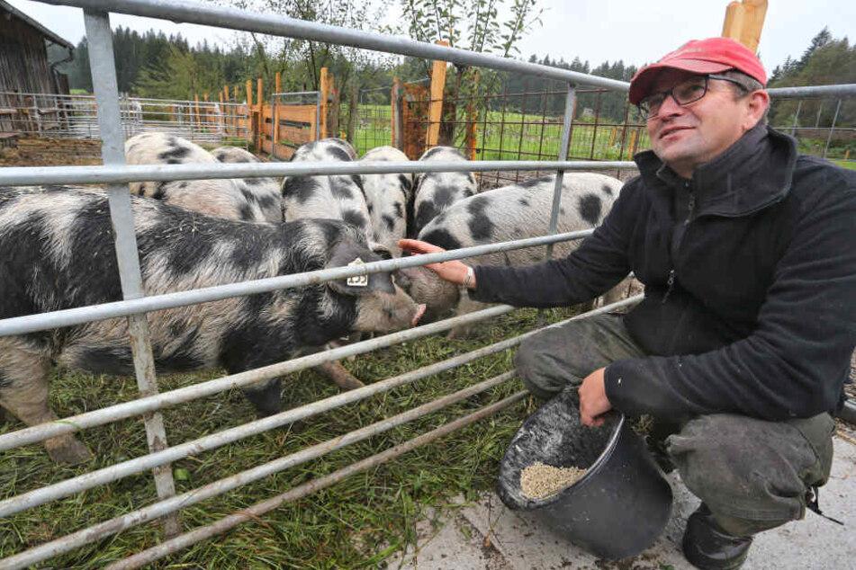 Nach rund einem Jahr bekommen sie ihr Schwein geschlachtet und in Portionen abgepackt zum Verzehr.