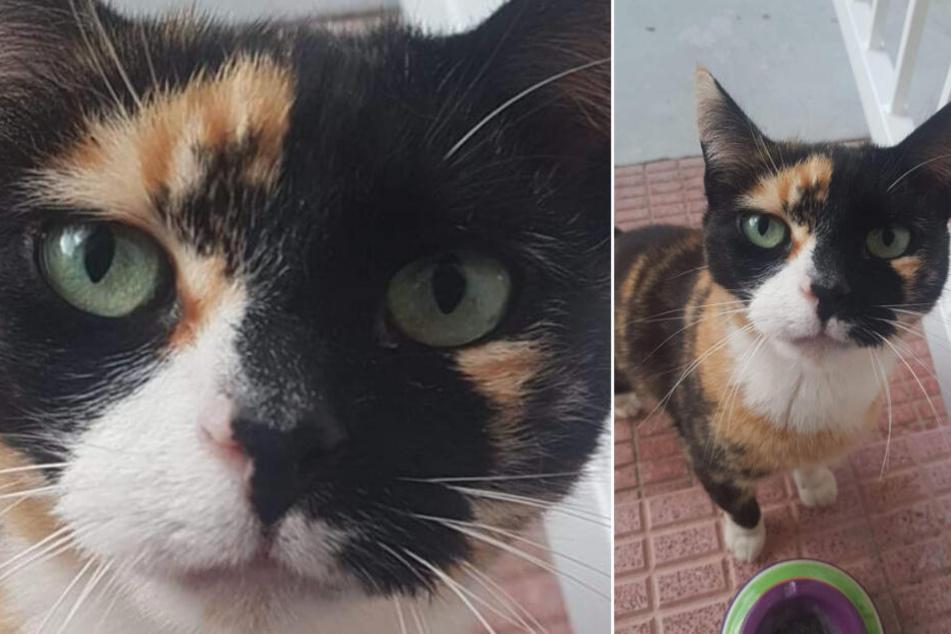 Katze auf Flughafen verschwunden, jetzt soll sie mit diesem Trick gefunden werden