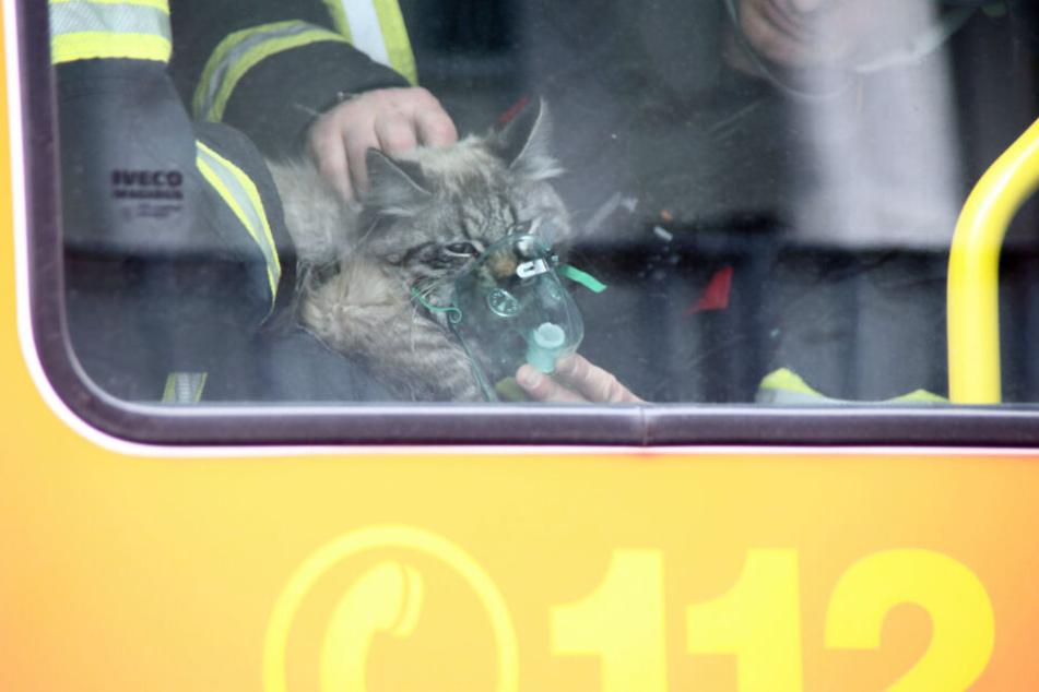 Die Katze wurde mit einem Sauerstoffgerät beatmet.