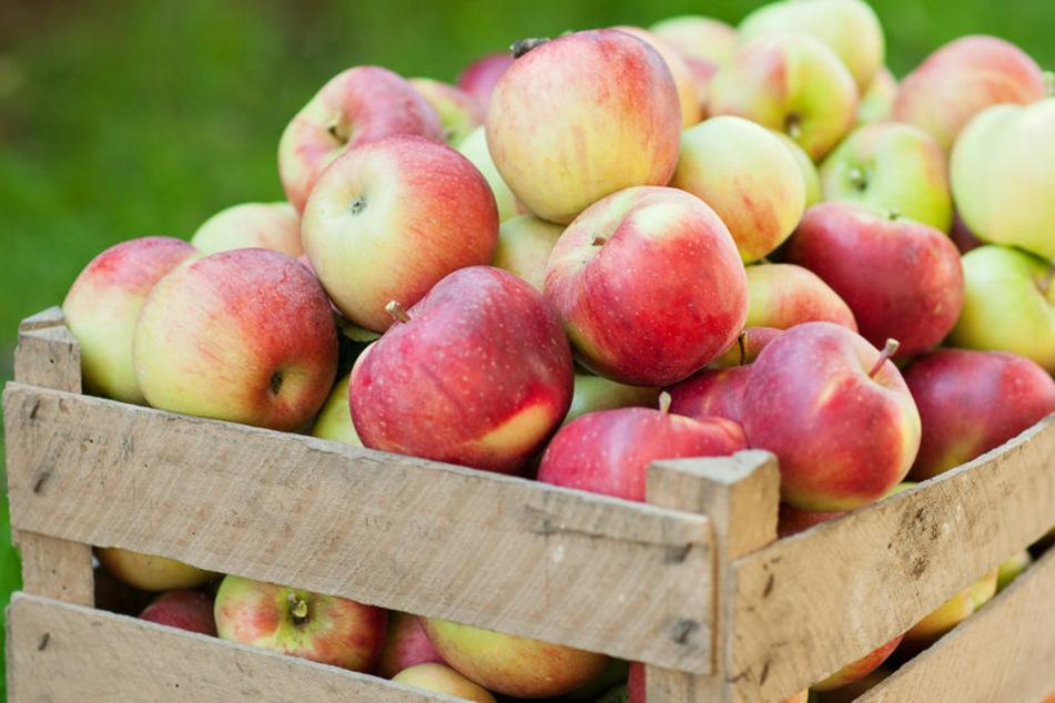 Rund 250 Kilo Äpfel klaute ein Unbekannter im Unstrut-Hainich-Kreis (Symbolbild).