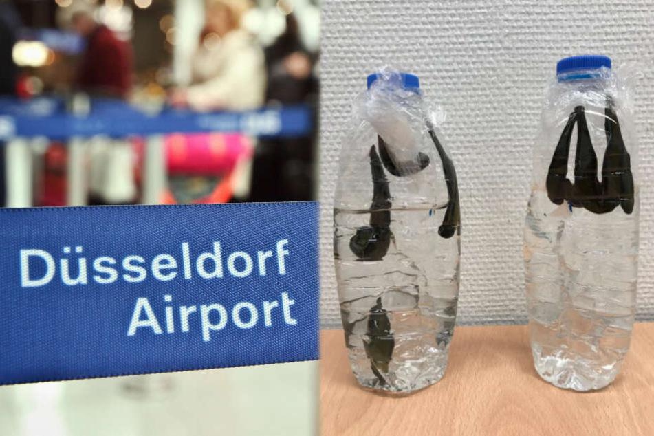 Die Tiere wurden am Düsseldorfer Flughafen vom Zoll beschlagnahmt beschlagnahmt.