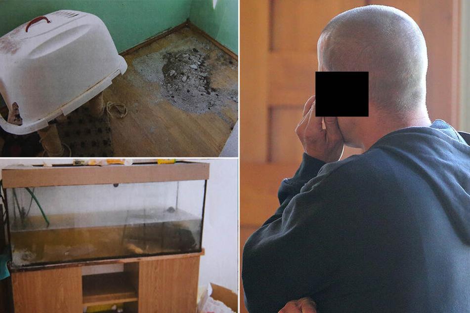 Kot, Schimmel, Essensreste: Koch ließ seine Haustiere verwahrlosen