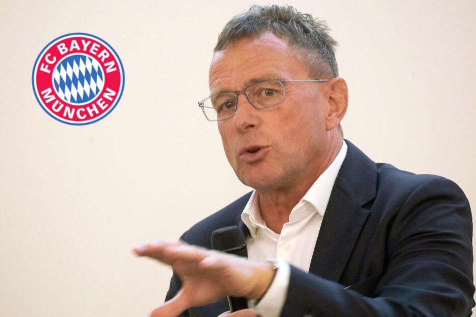 Abfuhr: Ralf Rangnick hat keine Lust auf den FC Bayern