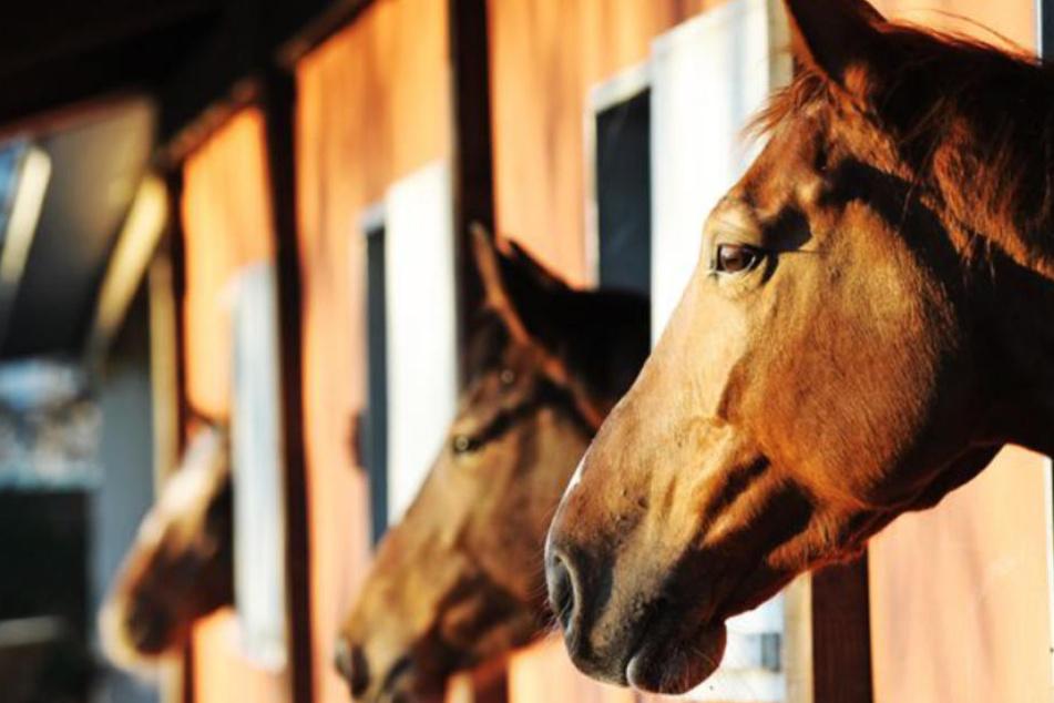 Schrecklich: Zwei Pferde verenden qualvoll nach Vergiftung, jetzt ist das dritte Tier tot