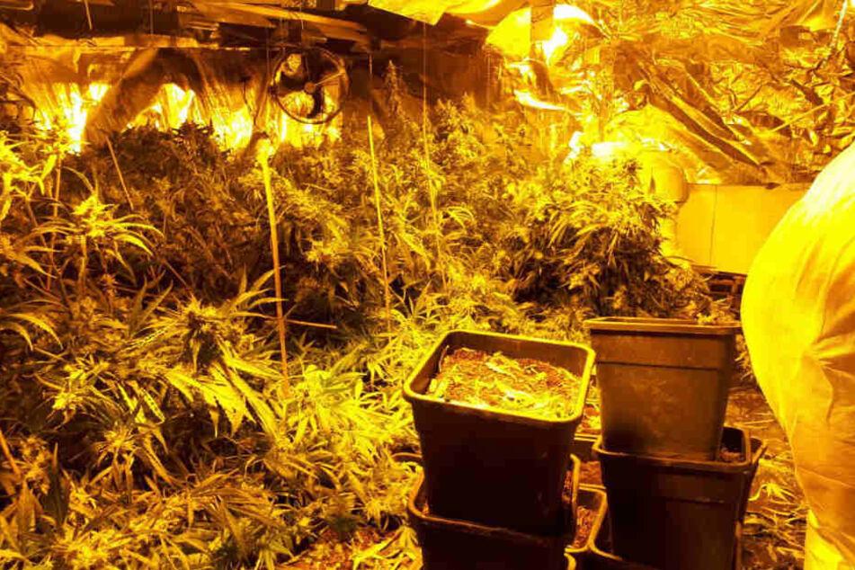 38 Kilogramm Marihuana im Wert von 200.000 Euro entdeckten die Polizeibeamten.