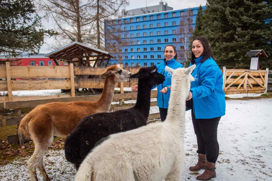 Katja Czayka (32) und Bianca Moosdorf (23) vom Hotel Am Bühl füttern Alpakas im hauseigenen Gehege.