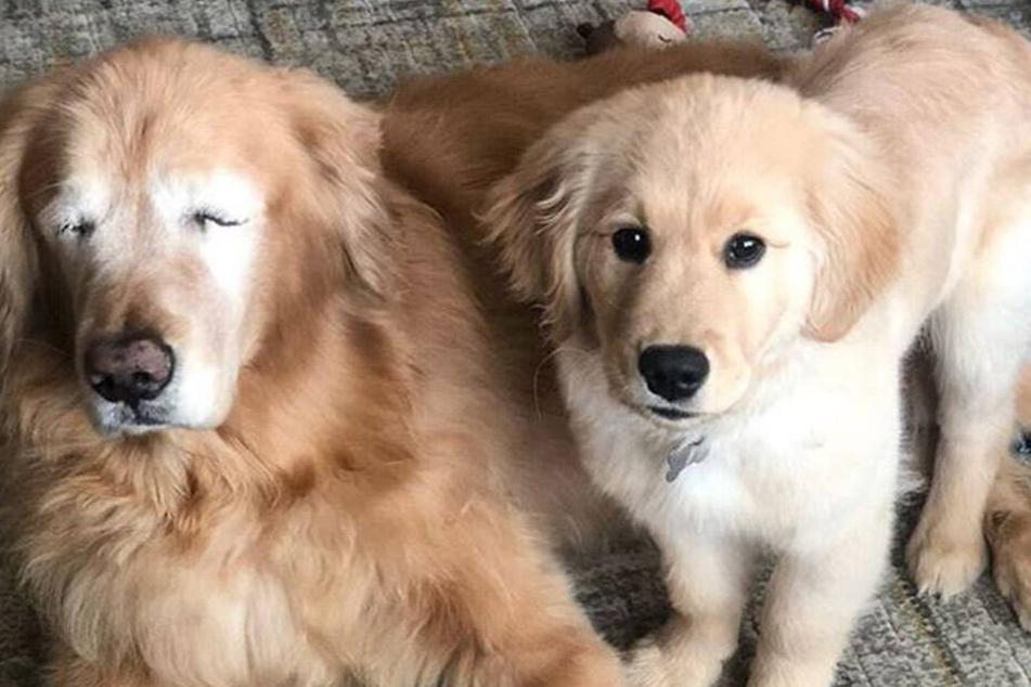 Sind ein unschlagbares Team: Charlie und Maverick.