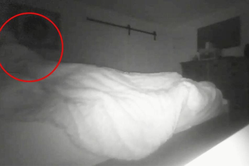 Was richtet sich hier im Bett auf?