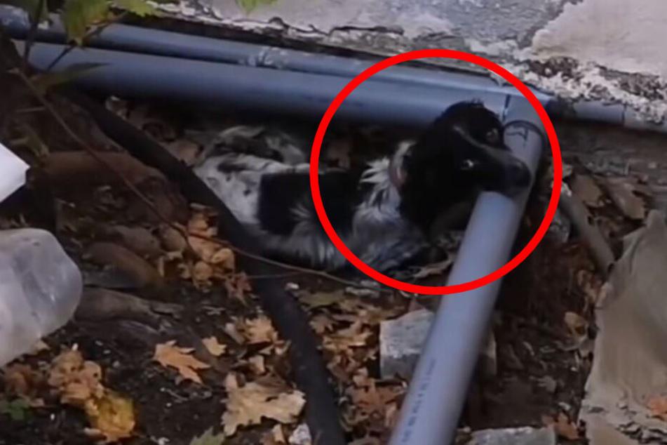 Hund versteckt sich tagelang: Wovor hat er solche Angst?