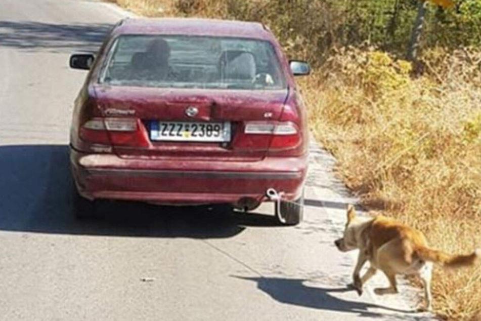 Man sieht, wie der arme Hund versucht, hinter dem Auto herzukommen.