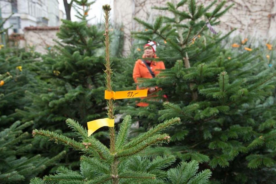 Die Diebe hatten es auf die Weihnachtsbäume vor einem Baumarkt abgesehen. (Symboldbild)