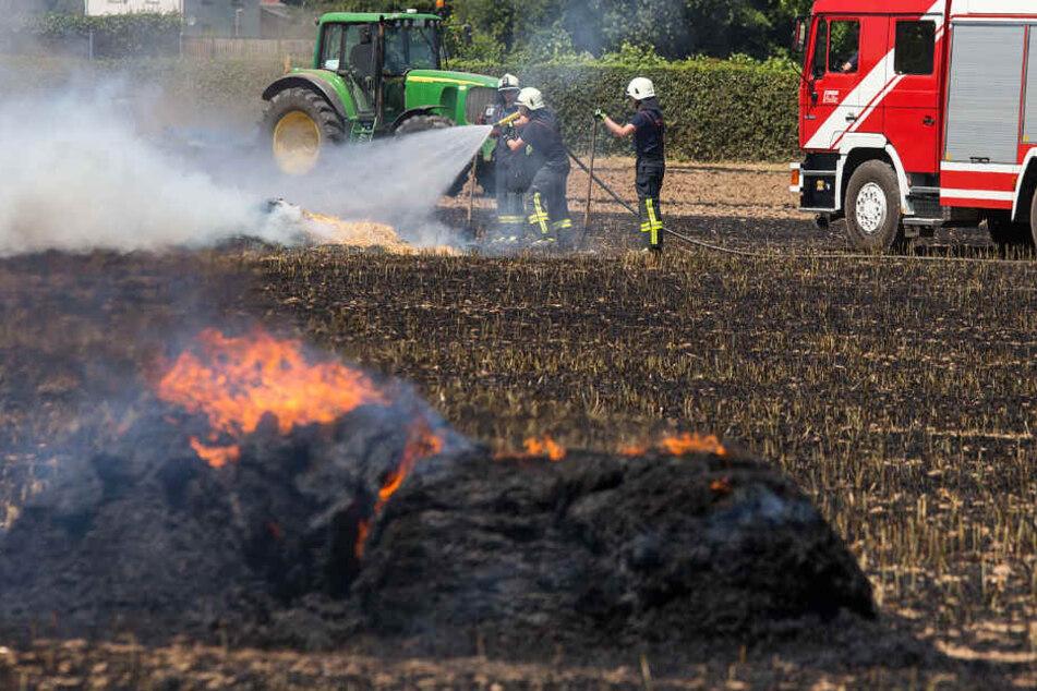 Laut einem Zeugen war der Brand bei Hattersheim wegen der Trockenheit sehr intensiv.