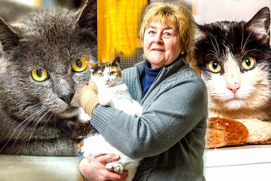 Miau! Diese süßen Miezen suchen ein neues Zuhause