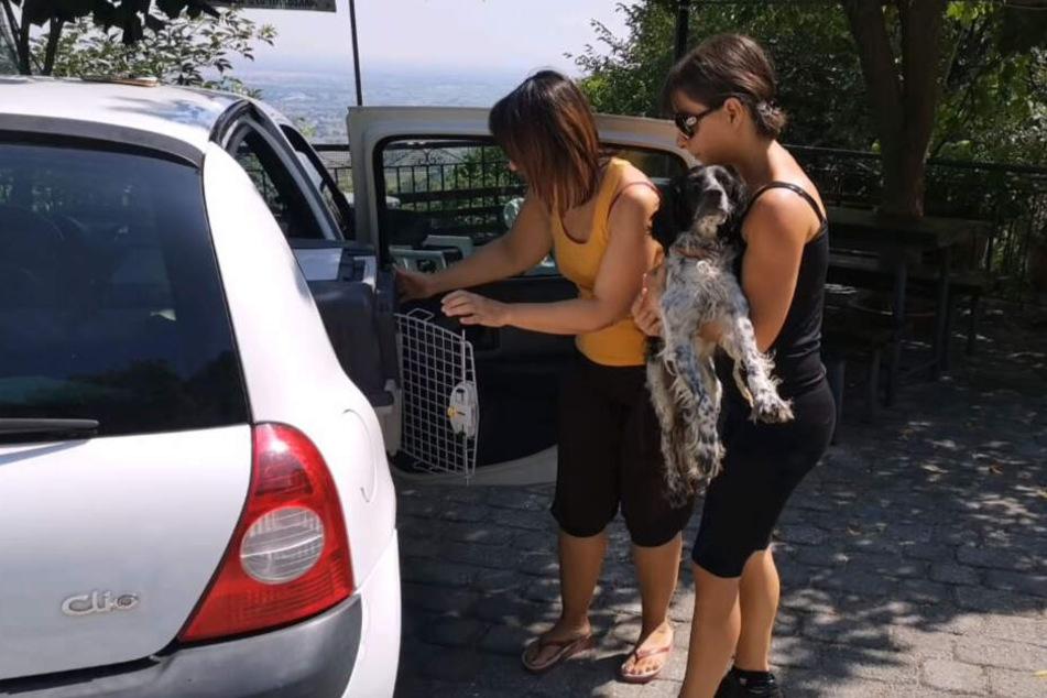 Der Hund kam erstmal mit ins Auto.