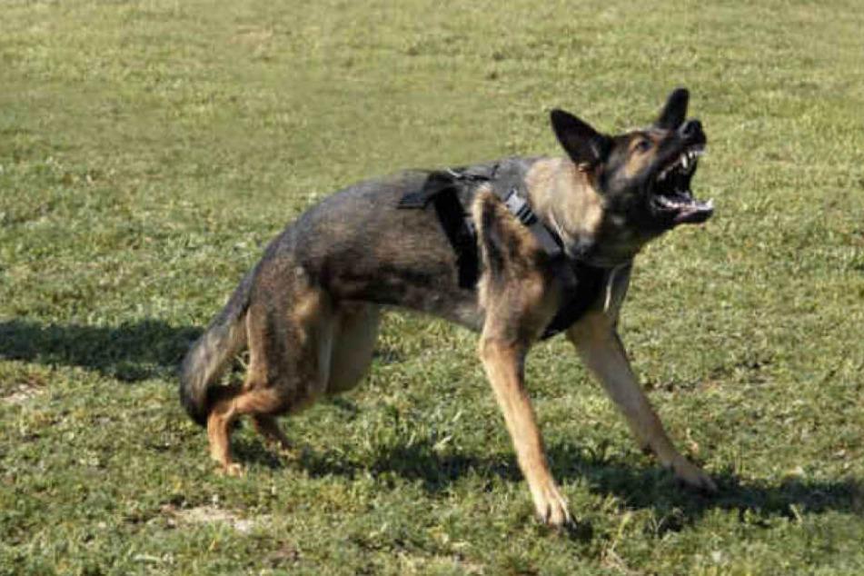 Ein Schäferhund hat ein Mädchen (3) in Leipzig-Grünau gebissen. (Symbolbild)