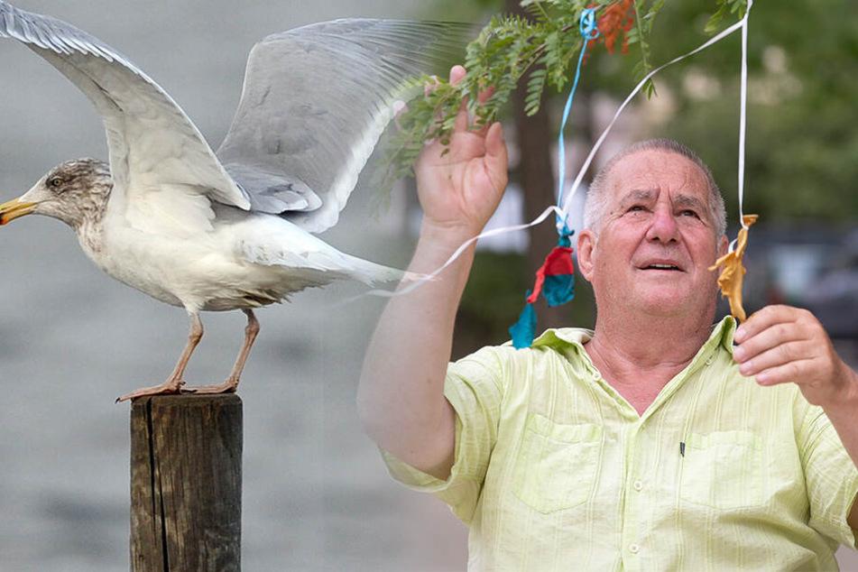 Weil Vögel massenhaft daran verrecken! Dieser Görlitzer kämpft gegen Luftballons