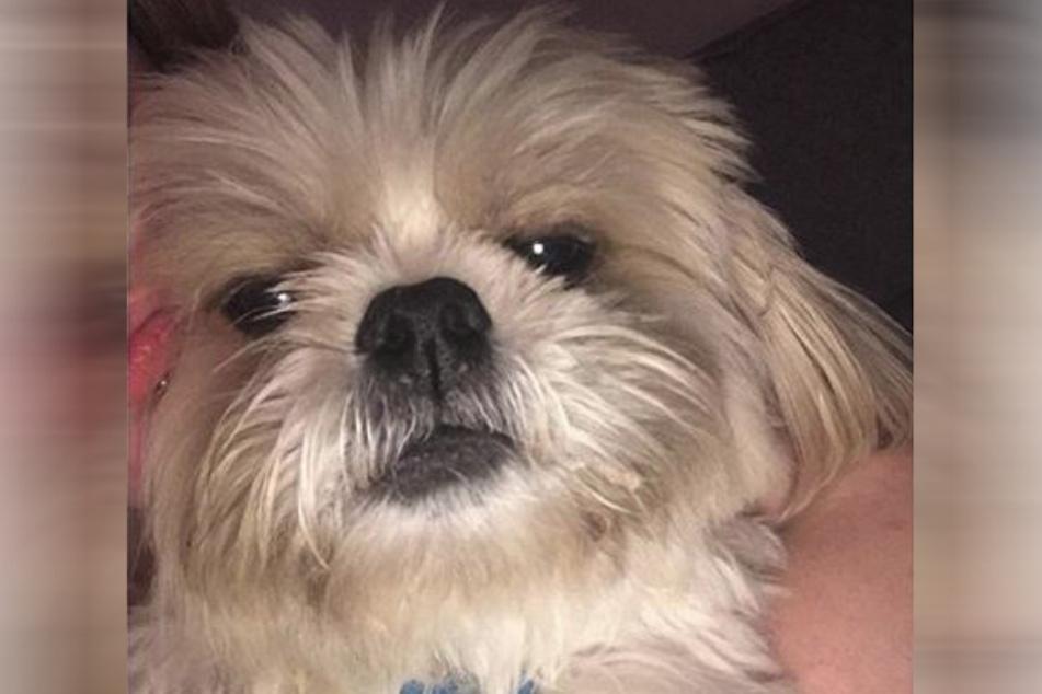 Sterbenskrank: Der arme Hund Charlie.