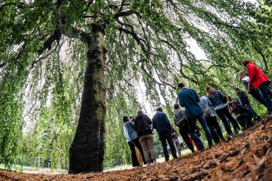 Trotz Regen: Dürre-Sommer 2019 wird zur Gefahr für Bäume in Hessen