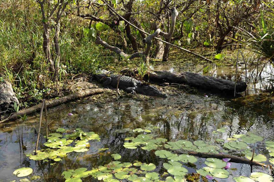 Im Kakadu-Nationalpark ist ein Mann von einem drei Meter langen Krokodil getötet worden.