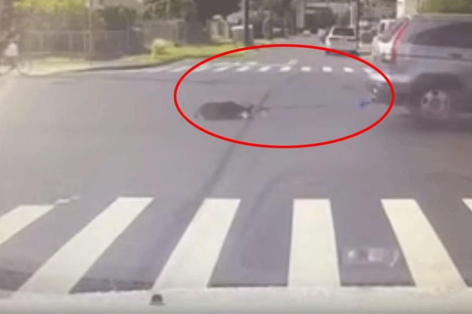 Hund wird bei lebendigem Leib von fahrendem Auto gezogen