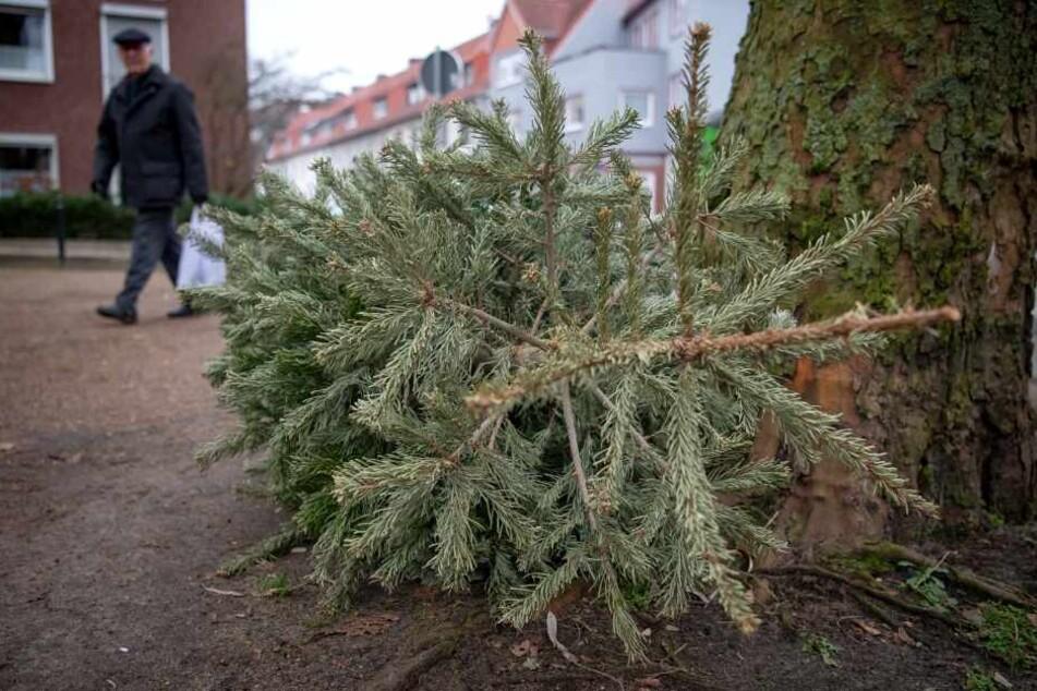 Entsorgung beginnt: Das passiert mit Frankfurts ausgedienten Weihnachtsbäumen